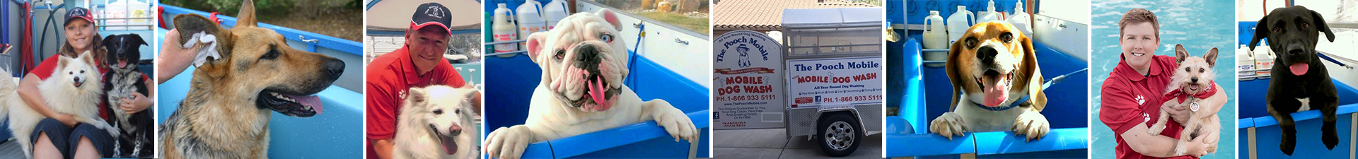 Dog grooming mobile dog washing pet grooming with the pooch mobile your pooch will enjoy our all inclusive dog wash services year round solutioingenieria Choice Image