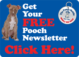 pooch newsletter