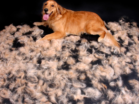 Hair Loss In Dogs Mobile Dog Grooming