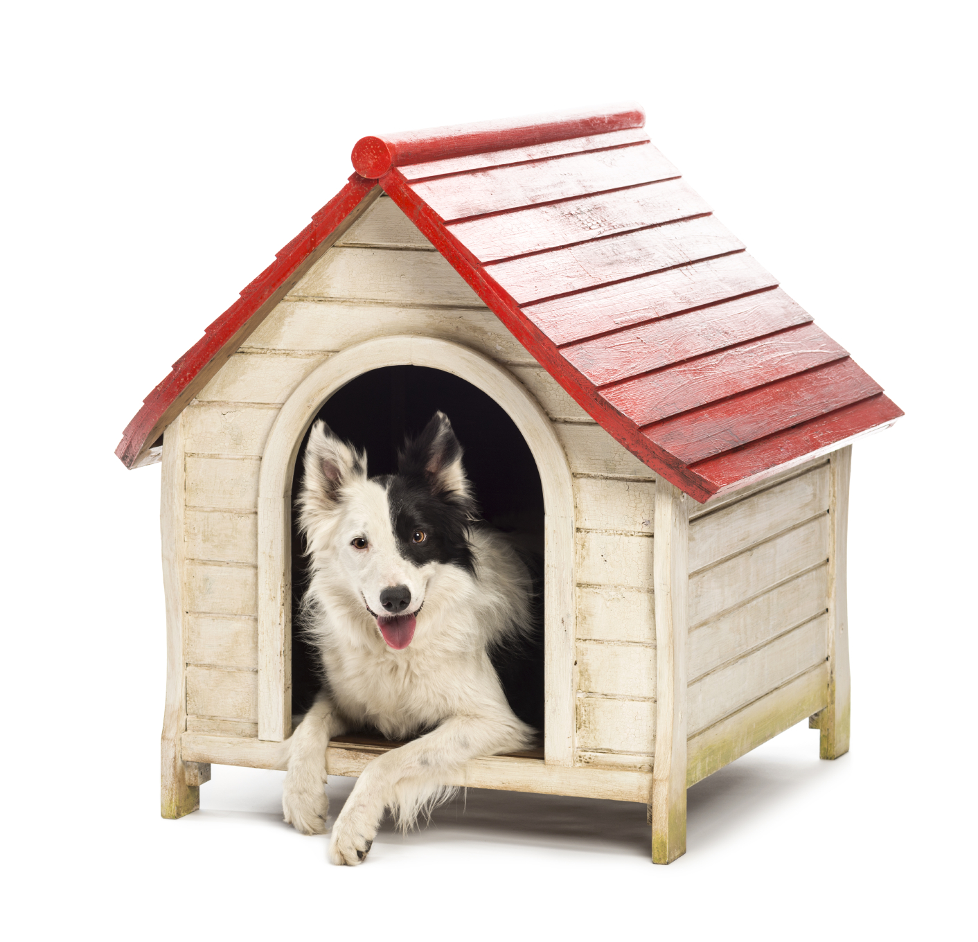 how to draw a dog in a kennel