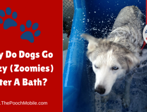 Why Do Dogs Go Crazy (Zoomies) After A Bath?