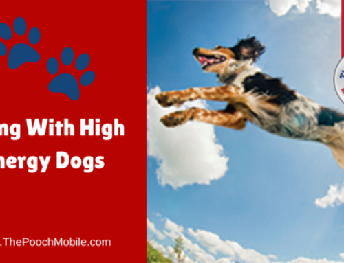 Living With High Energy Dogs