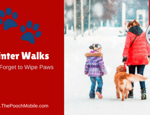Winter Walks – Wipe Paws