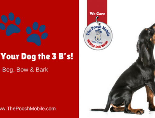 Teach Your Dog the 3 B's!