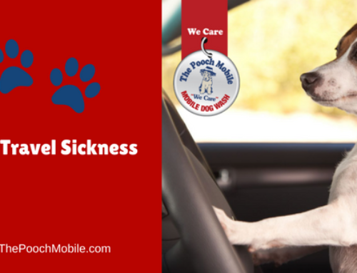 Dog Travel Sickness