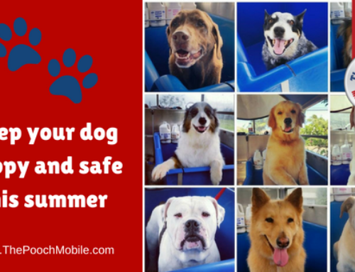 Keep your dog happy and safe this summer