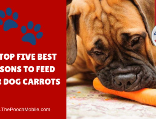 The Top Five Reasons To Feed Your Dog Carrots